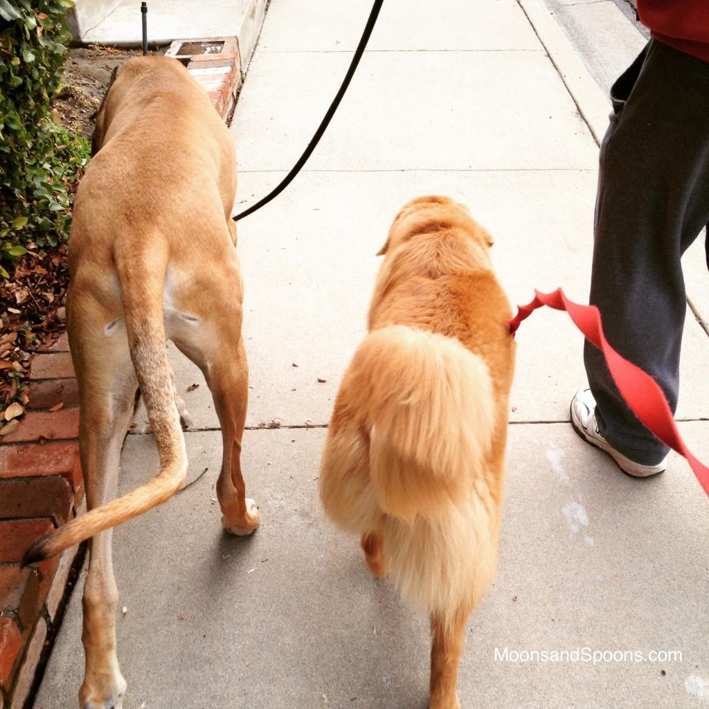 Bran and Rory Walk