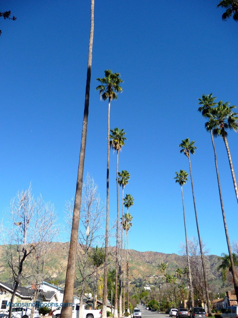 Neigborhood Palms Line Walk